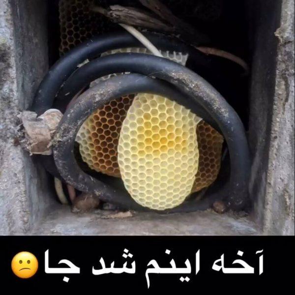 زنبورها داخل کنتور برق