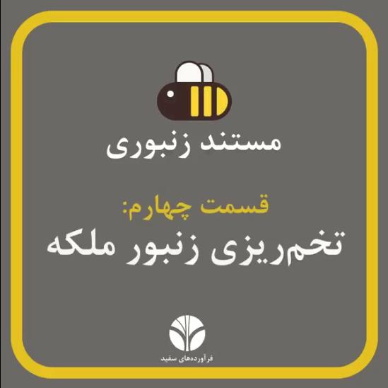 تخمگذاری زنبور ملکه | مستند زنبورانه | قسمت 3 | ملکه روزی 1500 تخم میگذارد...