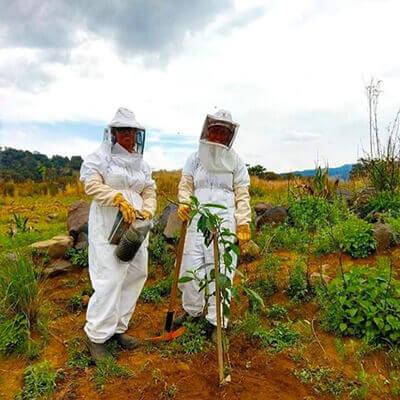 آیا گسترش زنبورداری محلی به حفظ زنبورها کمک میکند؟ | برای کمک به زنبورها چکار کنیم؟