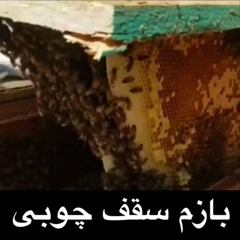 زنبورها در سقف چوبی