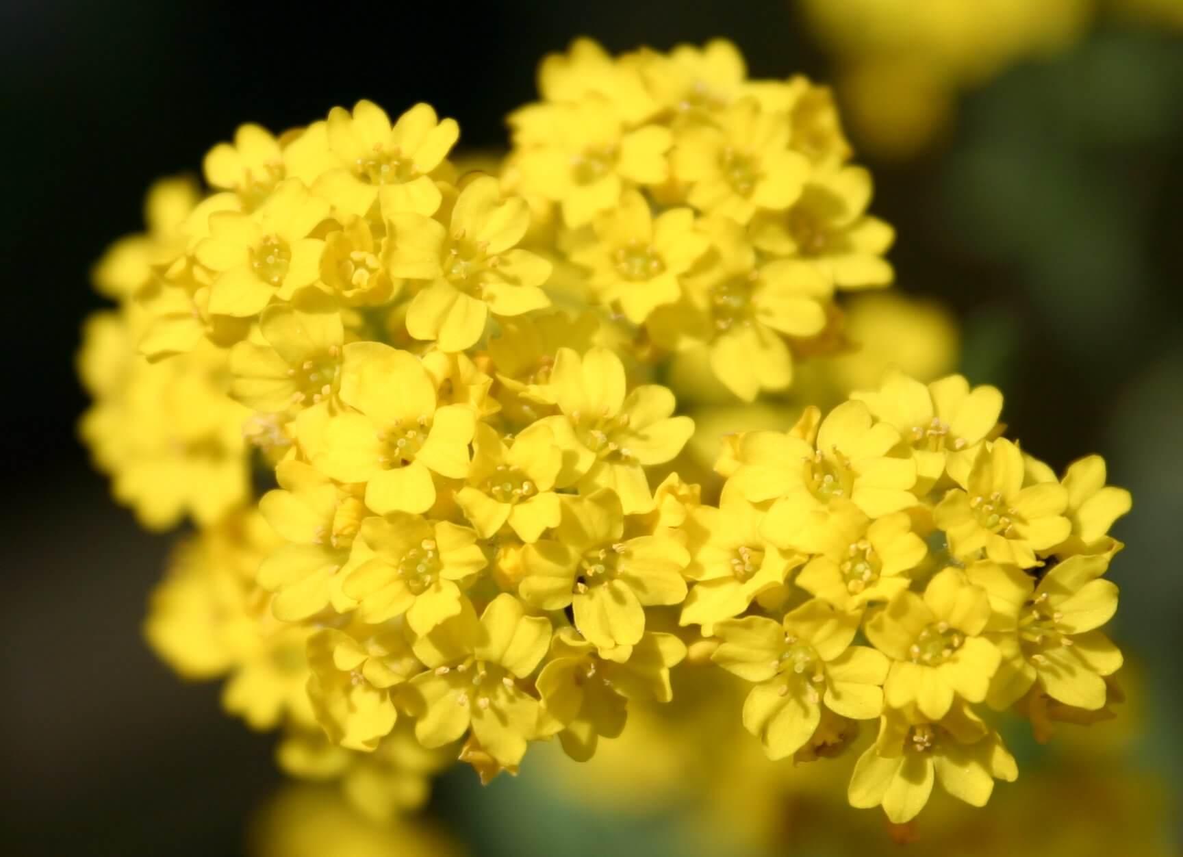 10 تا از بهترین گلهای برای زنبورها   گلهای مناسب برای زنبورها