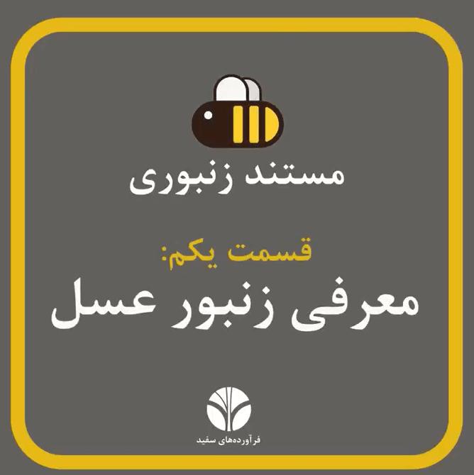 مستند زنبورانه | معرفی زنبور عسل | مهمترین نژاد زنبور برای انسانها، نژاد Apis Milifera