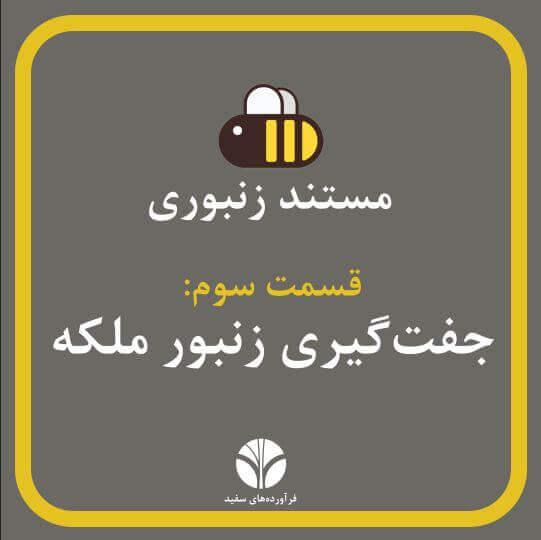 جفتگیری زنبور ملکه | مستند زنبورانه | قسمت 3 | ملکه تنها موظف به انجام یک کار است