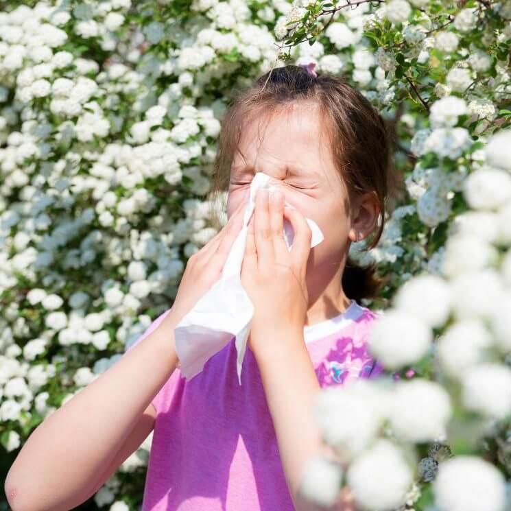 گرده گل در درمان آلرژی | درمان آلرژی فصلی | سفیدانه