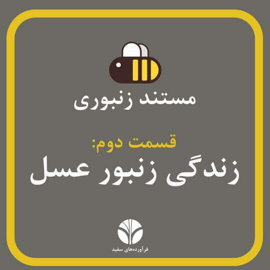 زندگی زنبور عسل | مستند زنبورانه | قسمت 2 | مهمترین نژاد زنبور برای انسانها