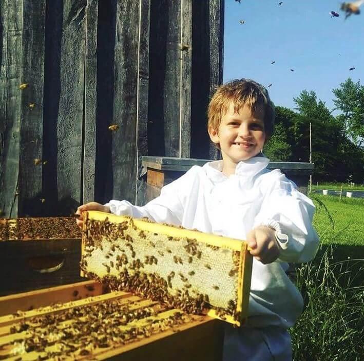 آیا گسترش زنبورداری به حفظ زنبورها کمک میکند؟