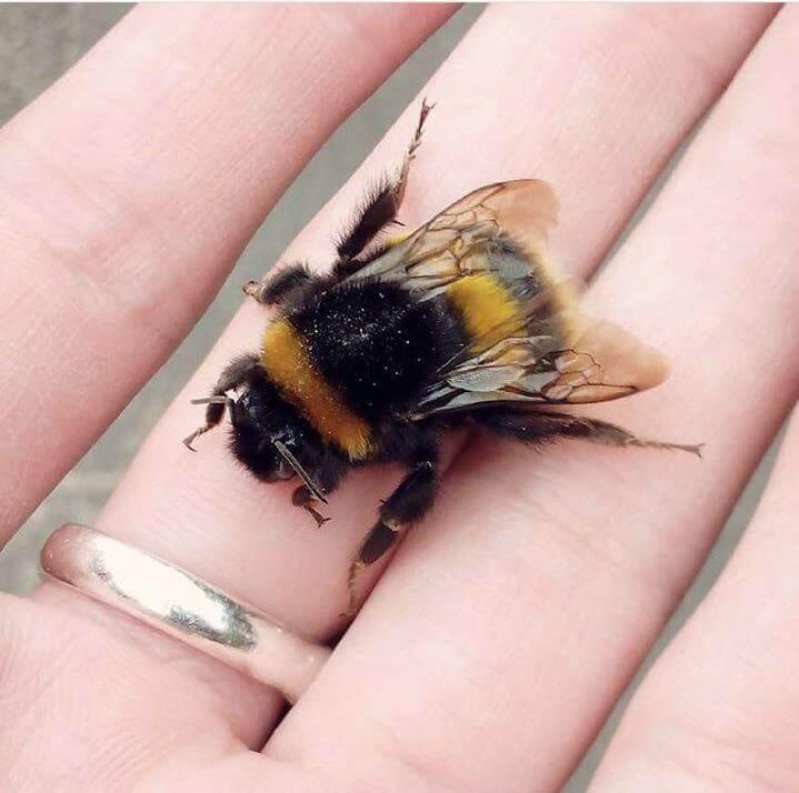 اهمیت زنبور عسل و زنبورهای وحشی برای انسان
