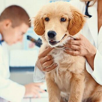 علائم و درمان آلرژی سگ ها | عسل برای درمان آلرژی و حساسیت حیوانات | درمان خارش در سگها | سفیدانه