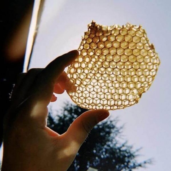 چرا کندوی زنبور عسل شش ضلعی است؟ | چرا کندو شش ضلعی است؟ | سفیدانه