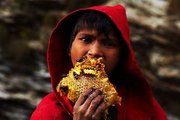 عسل وحشی از ارتفاعات نپال