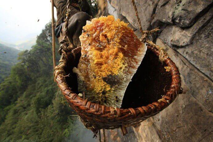 برداشت عسل وحشی از ارتفاعات نپال